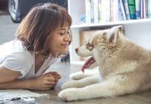 Adopter un animal de compagnie : quelles dispositions prendre ?