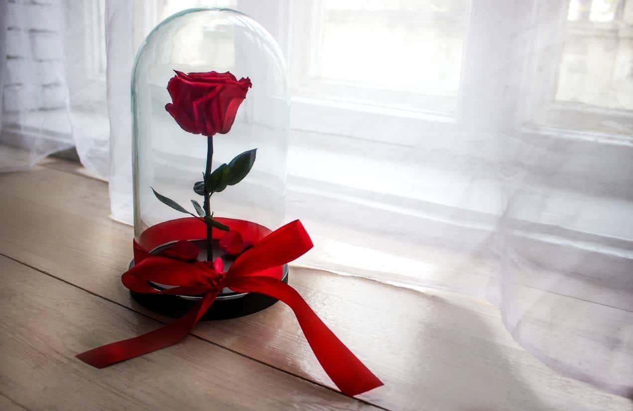 La rose éternelle sous cloche a été élue meilleure création de l'année 2020 !
